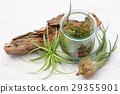 Interior green of Air plants and terrariums 29355901