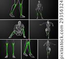 3d rendering medical illustration of  tibia bone 29356324