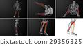 3d rendering medical illustration of tibia bone 29356325