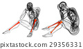 3d rendering medical illustration of the tibia 29356331