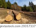 ไม้,เนื้อไม้,ต้นไม้ 29357337