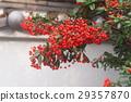 红 水果 日本主轴 29357870