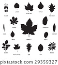Vector collection of leaf silhouettes 29359327