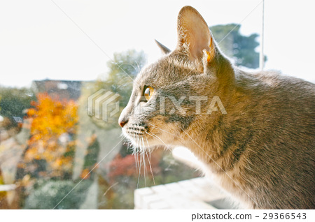 cat, pussy, raising 29366543