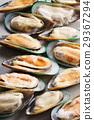 frozen green mussels 29367294