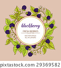 blackberry, vector, dessert 29369582