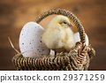 Easter animal and chick 29371259