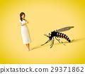 蚊子 女性 女 29371862