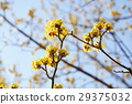 背景 黃色 黃 29375032