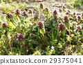 wildflower, wildflowers, spring 29375041