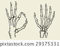 set of Skeleton hand 29375331