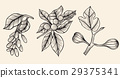 Vector collection illustration. 29375341