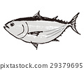 bonito, white background, fish 29379695