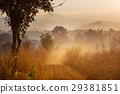 agriculture, country, thailand 29381851