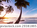 Tropical beach 29381865