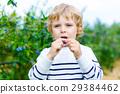 little kid boy picking fresh berries on organic 29384462