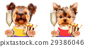 Funny dogs holding glass of champagne and gift 29386046