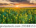 Sunset Sunrise Sky Over Horizon Of Spring 29388153