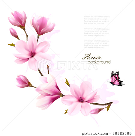 Nature background with blossom branch of magnolia 29388399