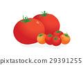 矢量 西红柿 番茄 29391255
