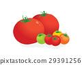 矢量 西红柿 番茄 29391256