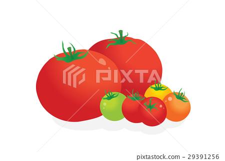 矢量 西紅柿 番茄 29391256