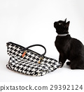 fashionable cat, stylish handbag 29392124