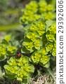 花朵 花 花卉 29392606