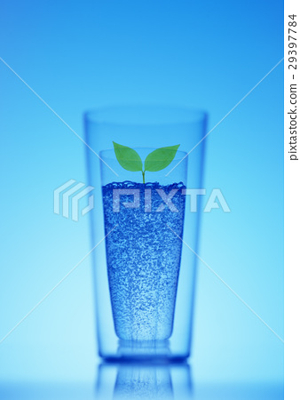 Futaba and glass cup 29397784