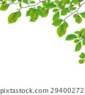spring, green, beech 29400272