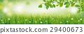 Spring Background Grass Beech Twigs Header 29400673