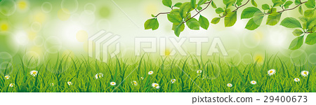 Spring Background Grass Beech Twigs Header 29400673
