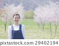 櫻花 櫻 賞櫻 29402194