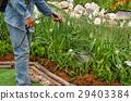 Workingman spraying insecticide the garden 29403384
