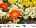 花朵 花 花卉 29406744