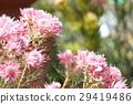 ดอกไม้,ไม้,โรงงาน 29419486