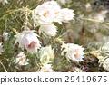 การจัดดอกไม้,ดอกไม้,ไม้ 29419675