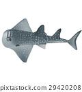shark ray 29420208