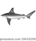 shark 29420209