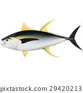 tuna 29420213