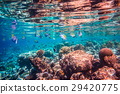 Tropical Coral Reef. 29420775