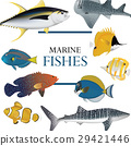 tropical fish collection marine vector 29421446