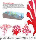 underwater Algae seaweed elements 29422218
