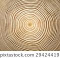 wooden texture 29424419