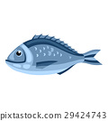 Dorada fish. Isolated illustration of seafood on 29424743