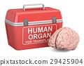 手提的 捐献者 器官 29425904