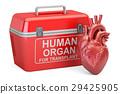 手提的 捐献者 器官 29425905