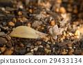 Germination of Succulent Plants 29433134