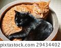 검은 고양이와 차 호랑이 고양이 낮잠 29434402
