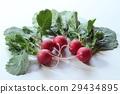 ผัก,อาหาร,สวนครัว 29434895